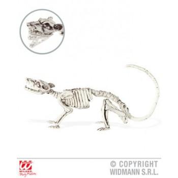 Esqueleto Raton