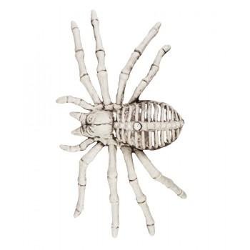 Esqueleto Araña