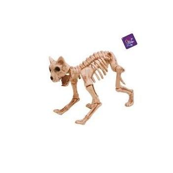 Esqueleto Gato